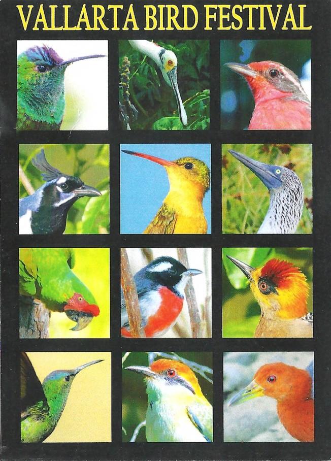 vallarta bird festival