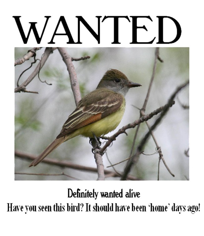 Wanted gcfly