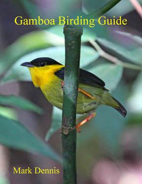 Gamboa Birding Guide