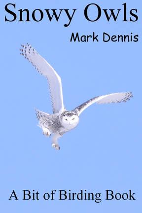 Snowy Owls – FREE